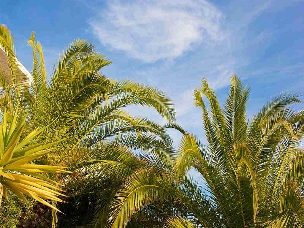 casa de verano con piscina y palmeras mediterráneas en sitges