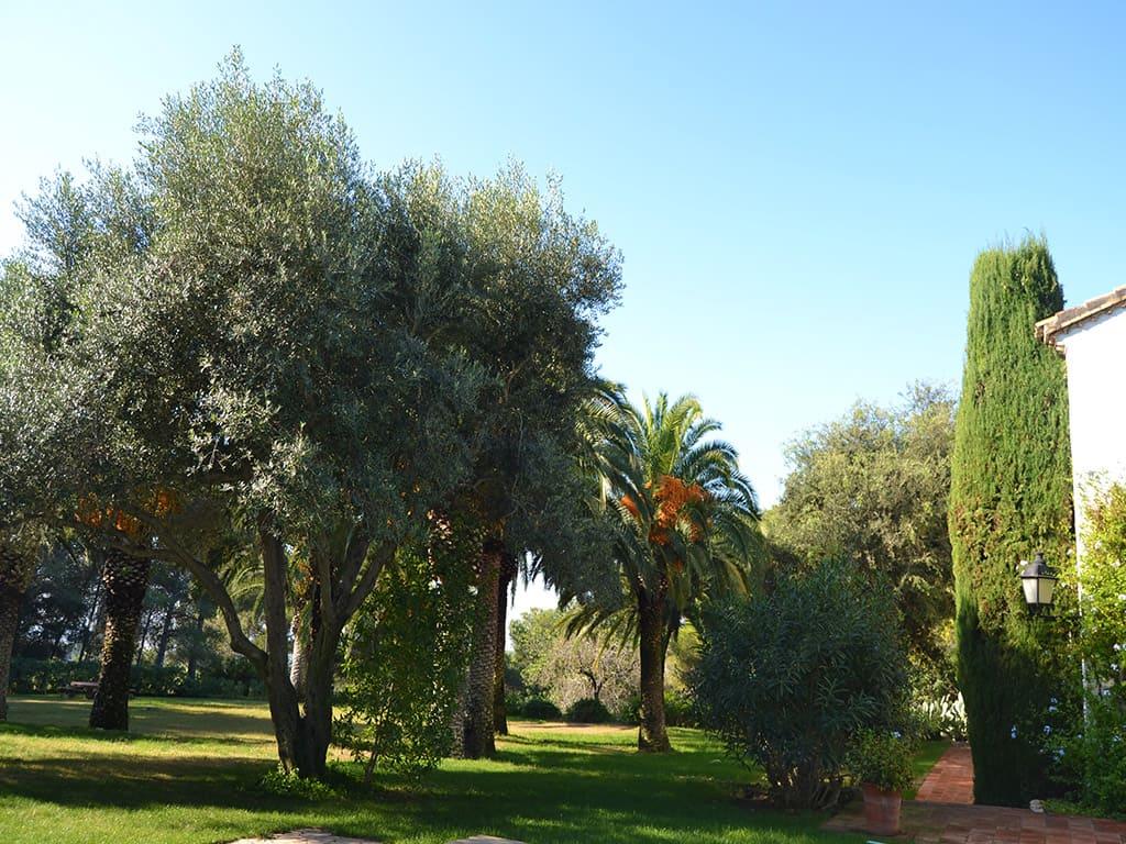 la casa rural en sitges con una vegetación frondosa y altas palmeras mediterráneas