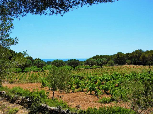 espectaculares vistas sobre los viñedos de la casa rural en sitges