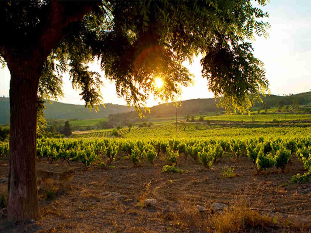 el penedès y la puesta de sol sobre los campos de viñas