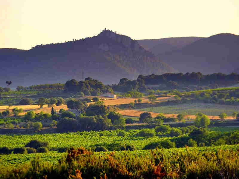 Activities in the Penedès: the wine region of Sitges