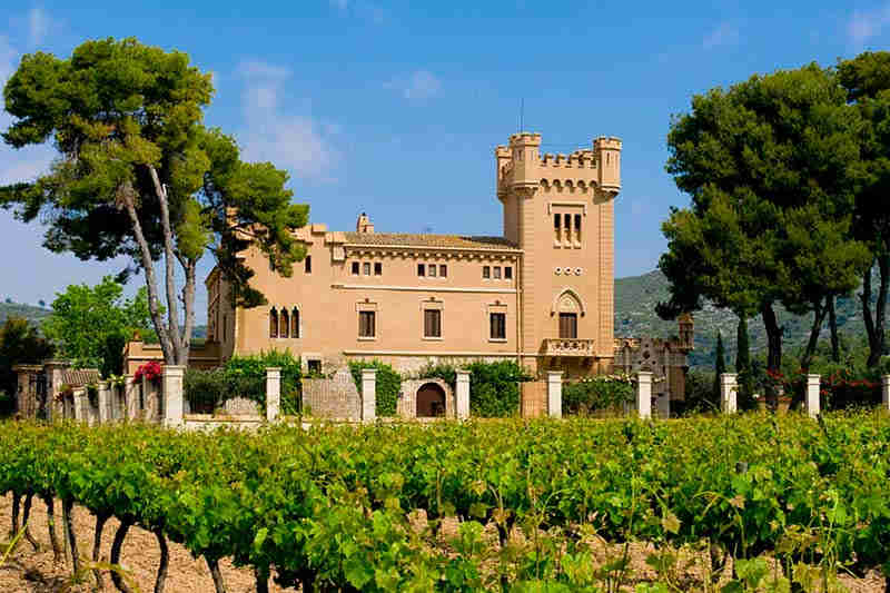 Activities in the Penedès: wine tour