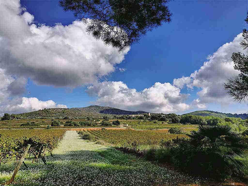 Casa de vacaciones con piscina privada en Sitges: viñedos