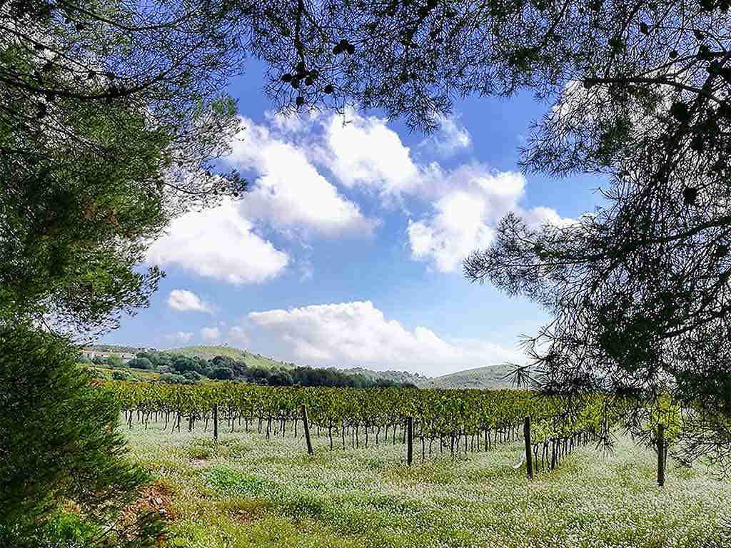 Casa de vacaciones con piscina privada en Sitges: viñedos del Garraf