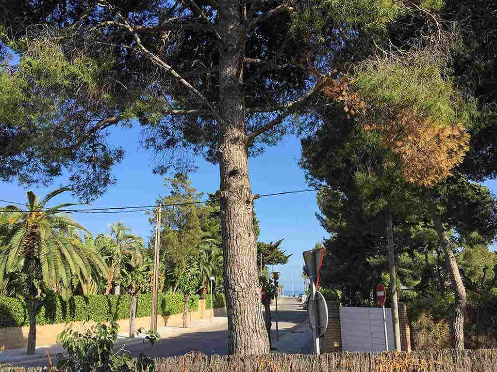 Sitges holiday villa near Barcelona: surroundings