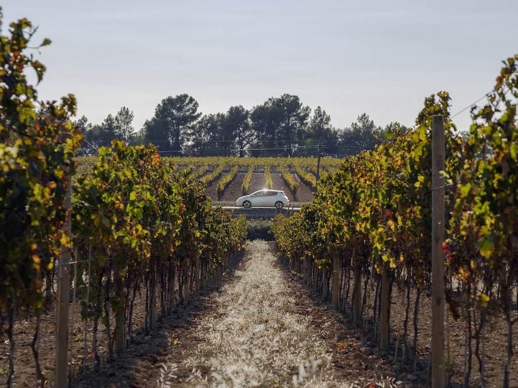 Vista desde un viñedo
